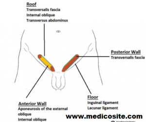 inguinal canal boundaries